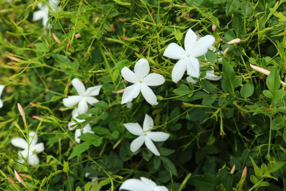 nestaflora-images-12