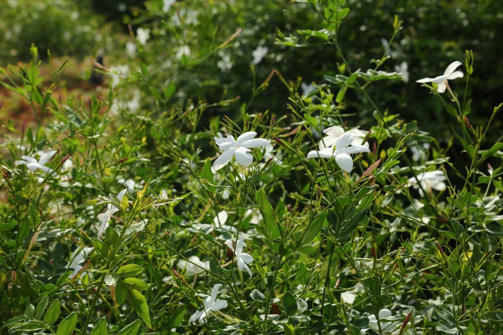 nestaflora-images-15