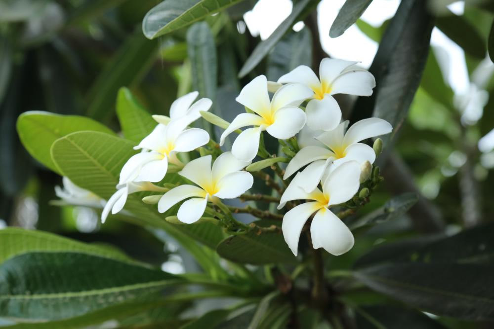 nestaflora-images-16