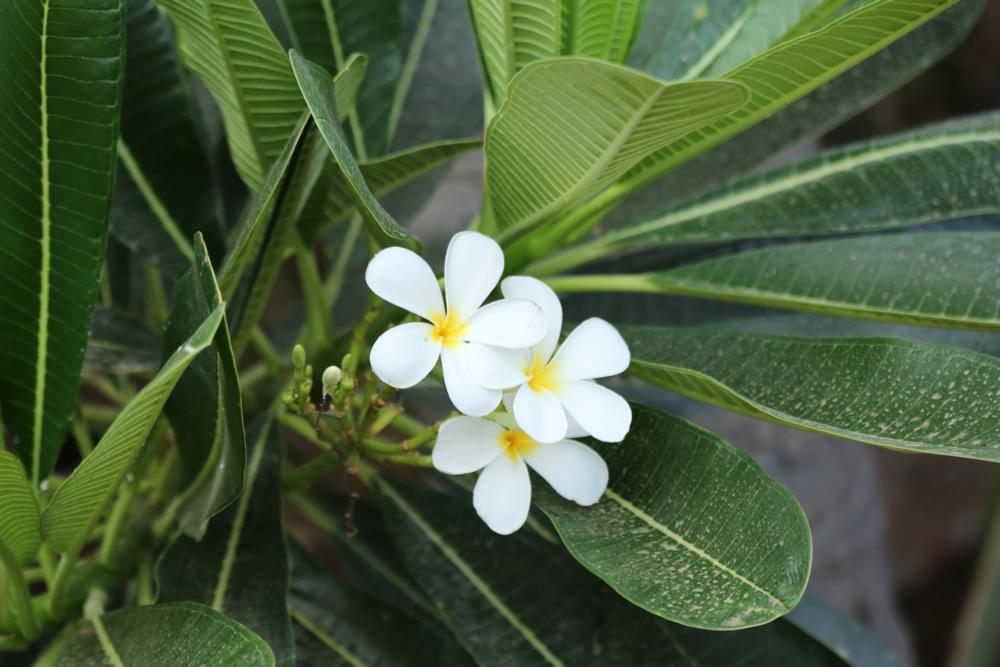 nestaflora-images-18