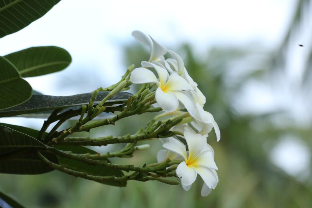 nestaflora-images-19