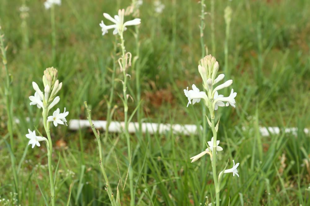 nestaflora-images-2