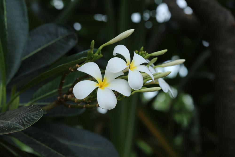 nestaflora-images-20