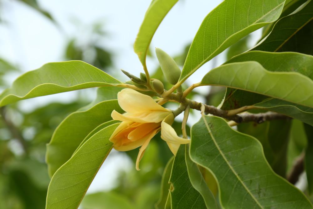 nestaflora-images-6