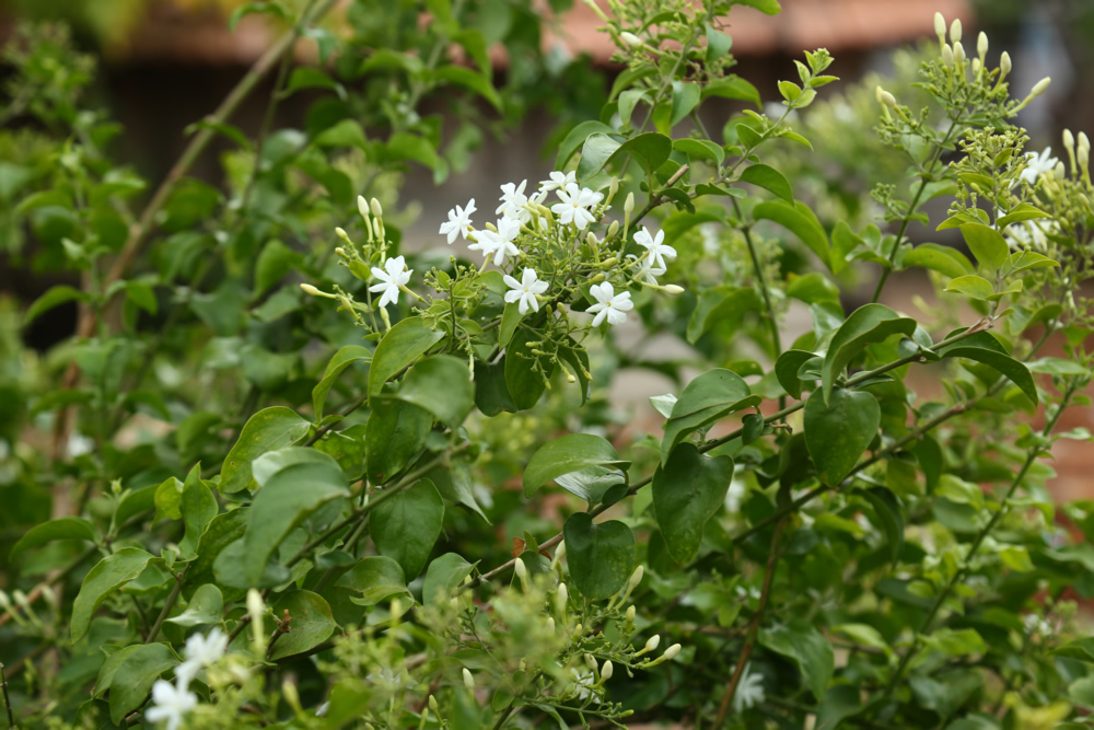 nestaflora-images-9